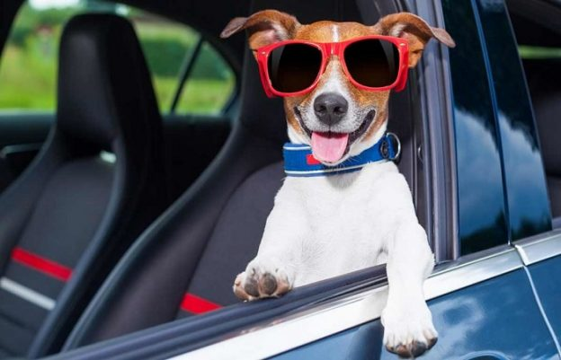 Car hire in Moraira with pets